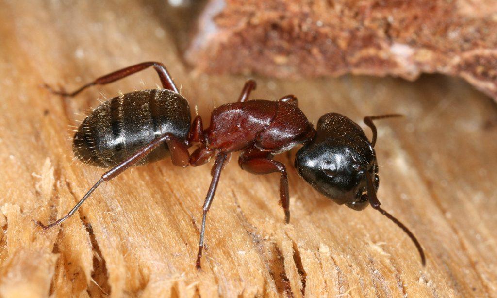 Pest Control Mosman